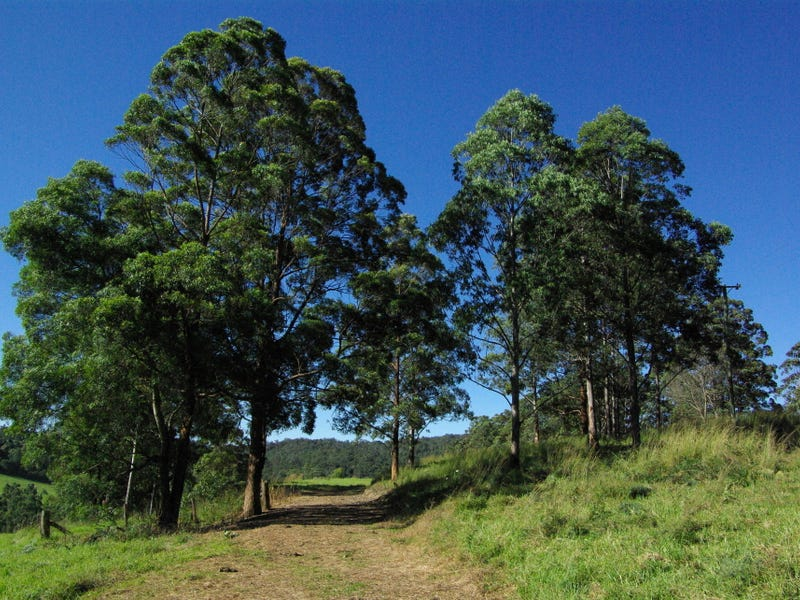 Lot 3 Schultz Road, Billys Creek, NSW 2453