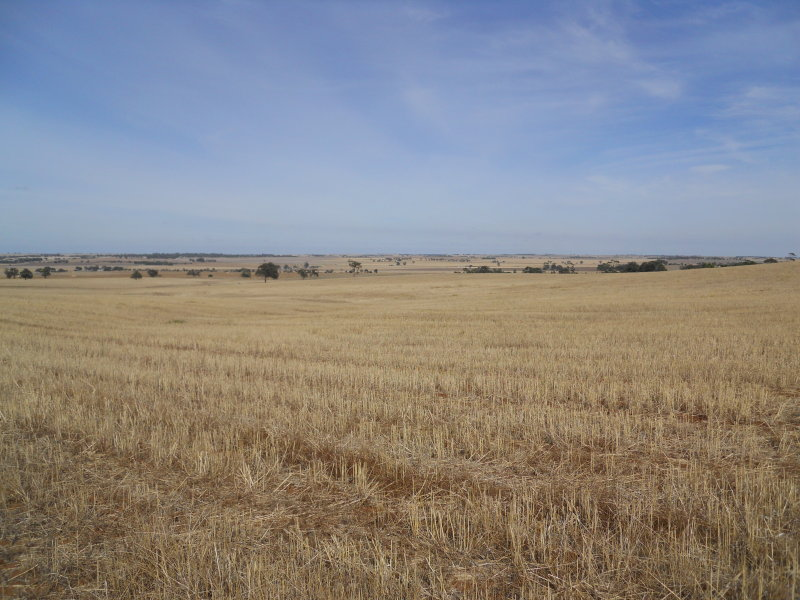 Lot 242 Boundary Road, Freeling, SA 5372