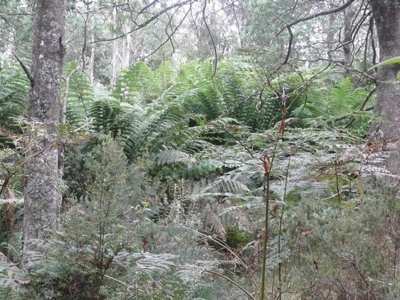 0 Bogan Road, Golden Valley, Tas 7304