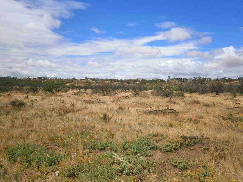 Lot 9 & 14 Claxton Road, Cadell, SA 5321