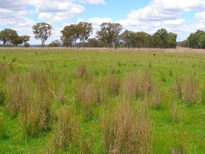 296 Limestone Road, Ashford, NSW 2361