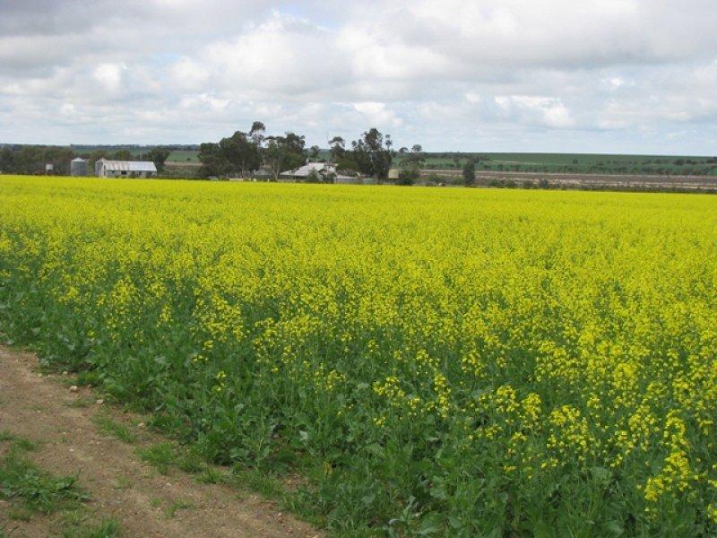 'Annean Farm', Ballidu, WA 6606