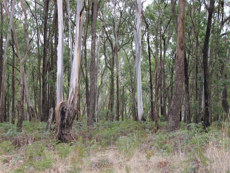 Lot52 F Bucks Road, Scotts Creek, Vic 3267