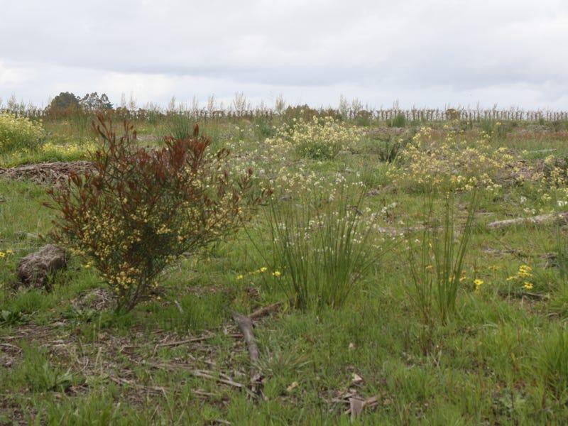 Lot 6 South Western Highway, Manjimup, WA 6258