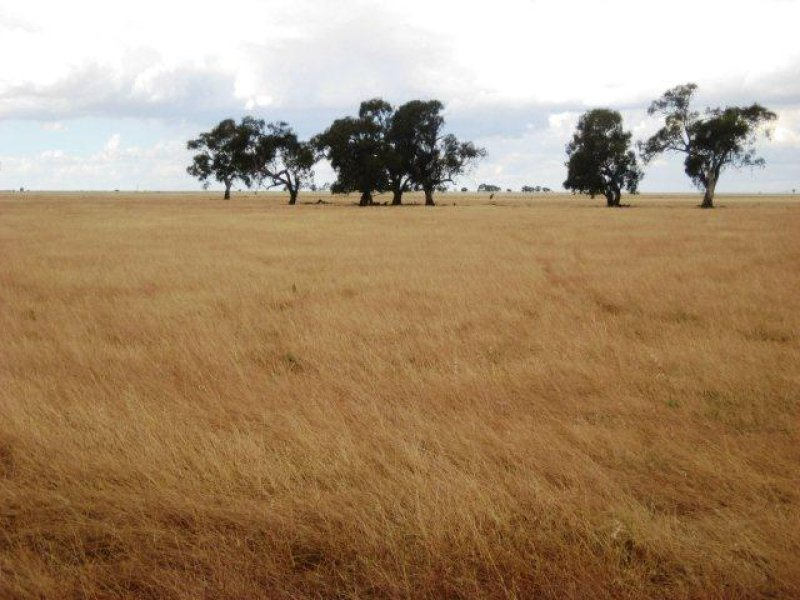 . Farm 668, Coleambally, NSW 2707