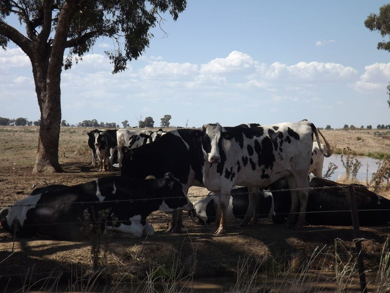 Riverina Highway, Finley, NSW 2713