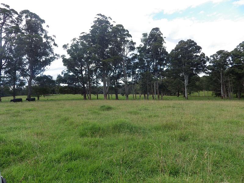 9408 Armidale Road, Tyringham, NSW 2453