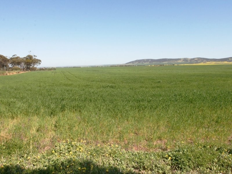 315 & 321, Hundred of Goyder, South Hummocks, SA 5550