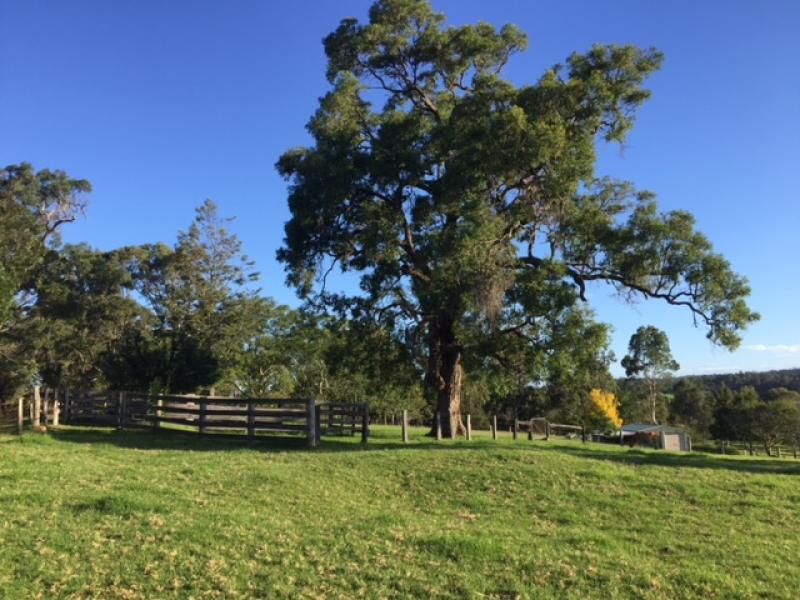 1A Cutharich  Place, Moruya, NSW 2537