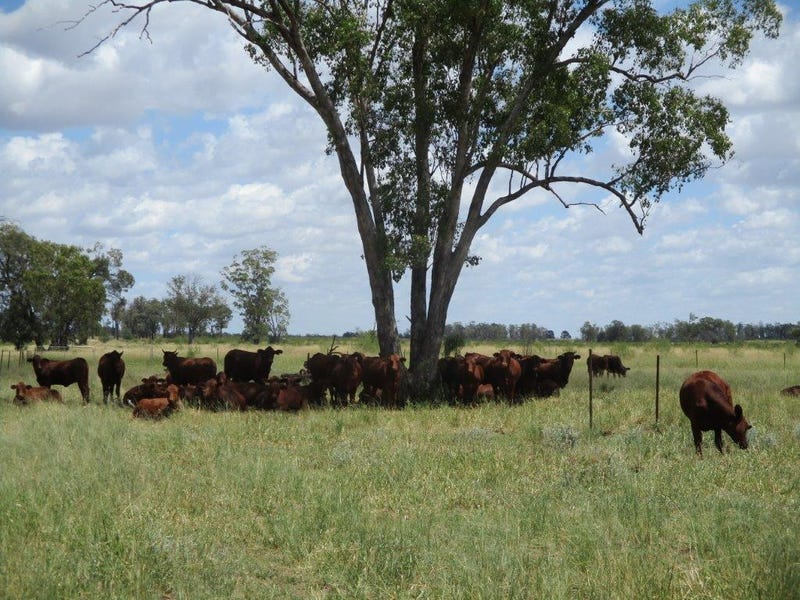 5528 ACRES FREEHOLD PLUS 2226 ACRES LEASE, Moonie, Qld 4406