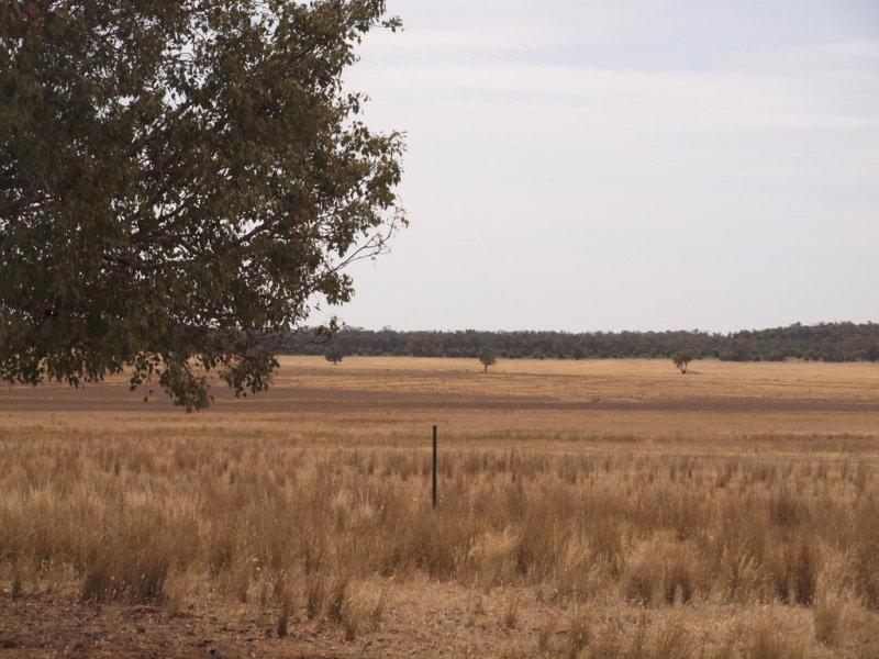 - Kinlea, Bectric, NSW 2665