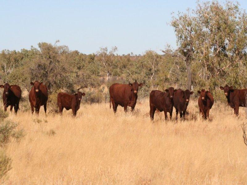 0 Plenty Highway, Alice Springs, NT 0870