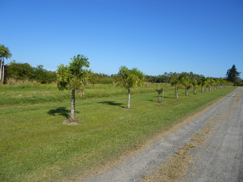 Lot 69 Louis Rd, South Innisfail, Qld 4860