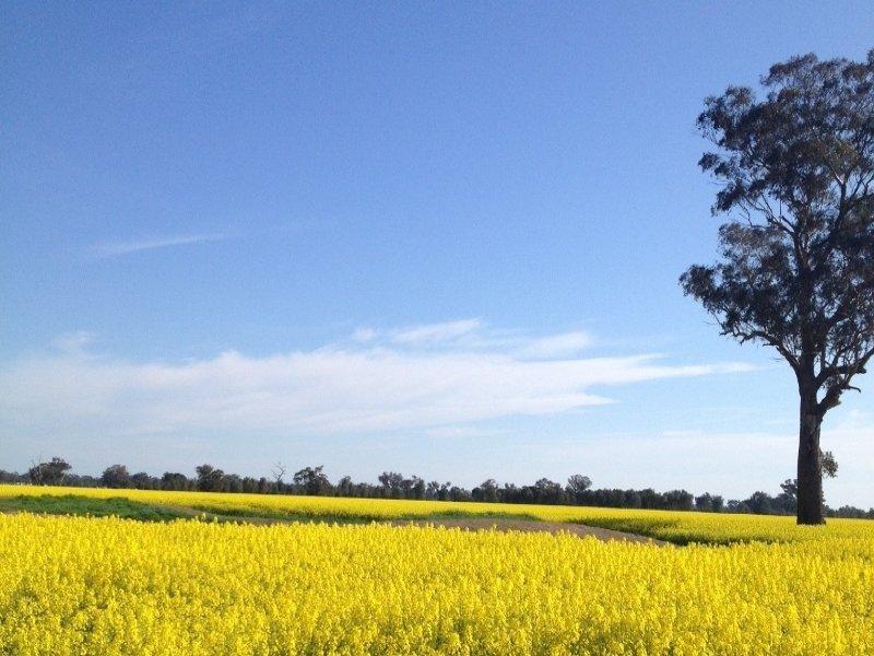 Goombargana Road, Howlong, NSW 2643