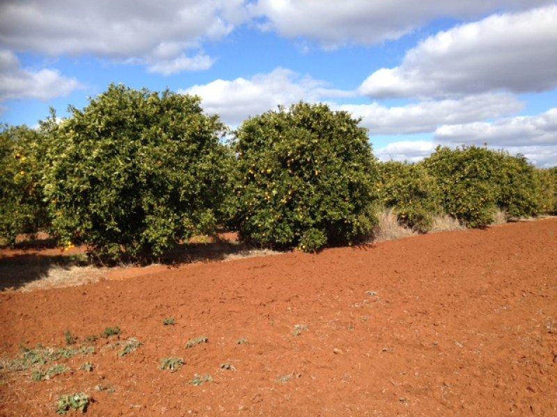 Farm 1898b Morris Rd, Lake Wyangan, NSW 2680