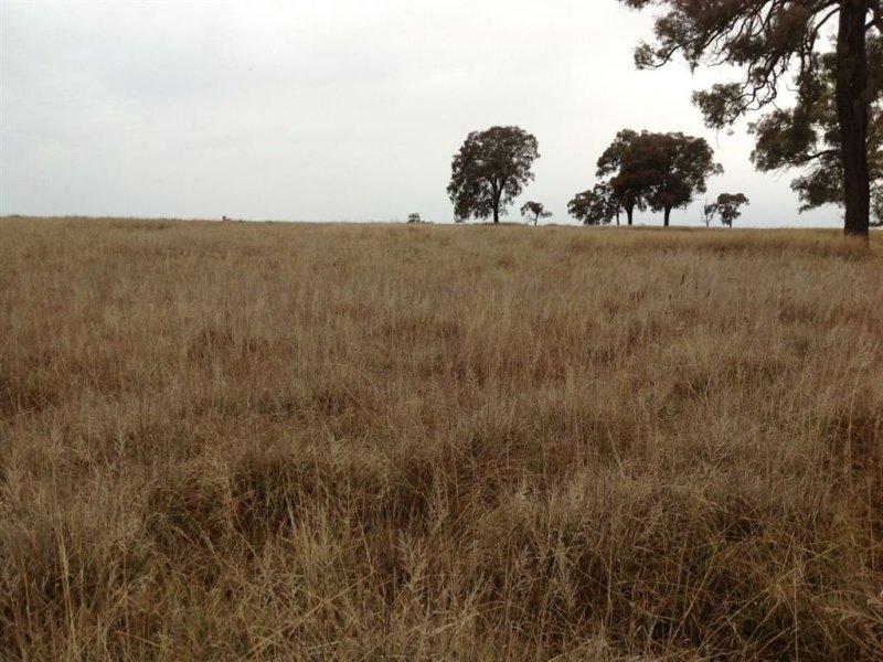 ' Wandaroo', Binnaway, NSW 2395