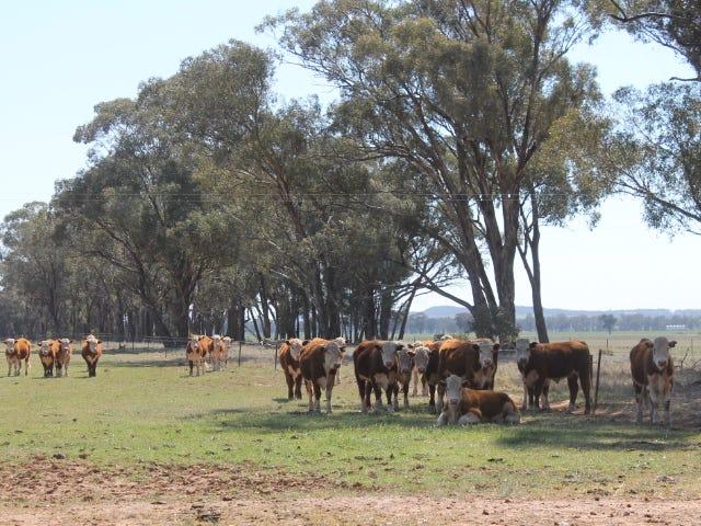 264 Thanowring school road, Temora, NSW 2666