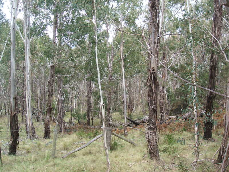 Lot 126 Foggy Forest Road, Anembo, NSW 2621