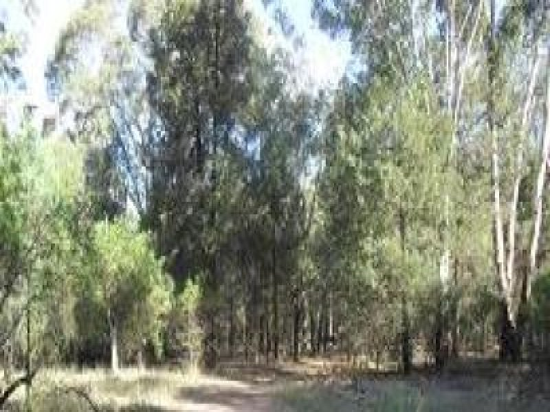 Lot 12, 6 Christie Drive, Gilgandra, NSW 2827