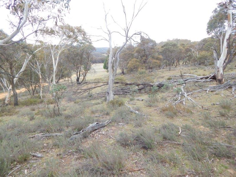 Lot 1 Nimmo Road, Eucumbene, NSW 2628