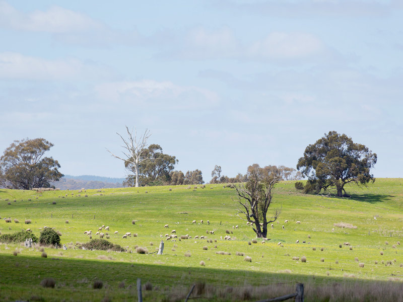 Muckleford Gower Land, Muckleford, Vic 3451