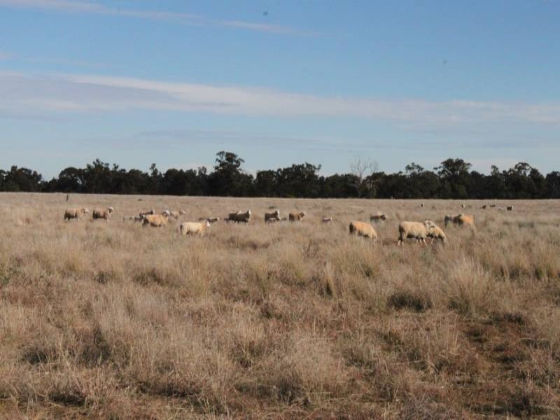 Address available on request, Condobolin, NSW 2877