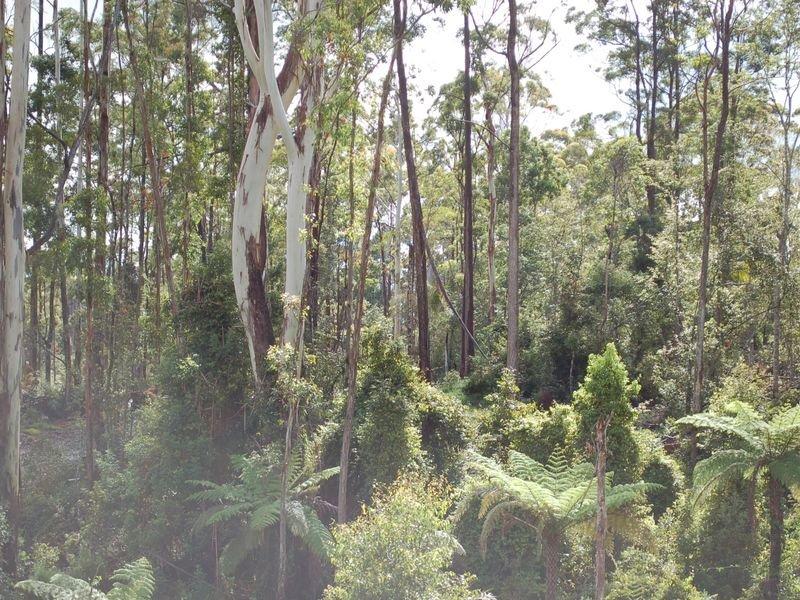 Lot 23 Lower Bo Bo Road, Ulong, NSW 2450