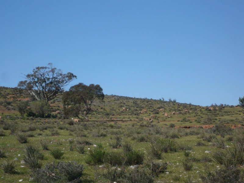 """Pohlners"" and ""Lily Whytes"", Mount Bryan East, SA 5419"