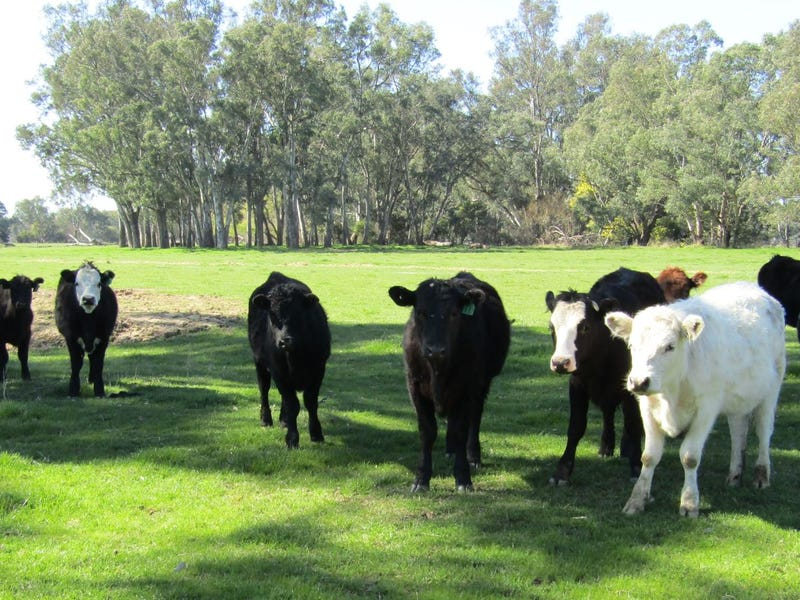 Lot 2 Wangaratta-Whitfield Rd, Moyhu, Vic 3732