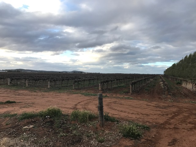 Farm 548C Bilbul Road, Bilbul, NSW 2680