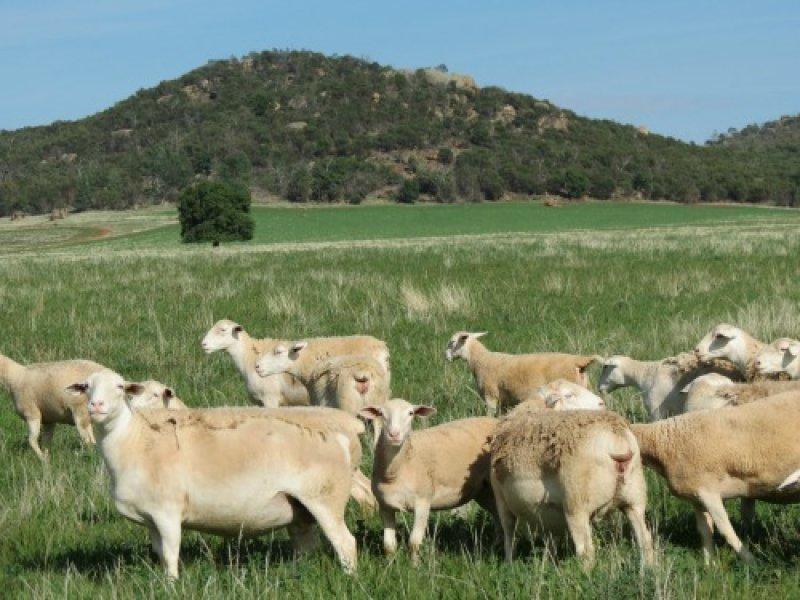 59 Goeschs, Narraburra, NSW 2666