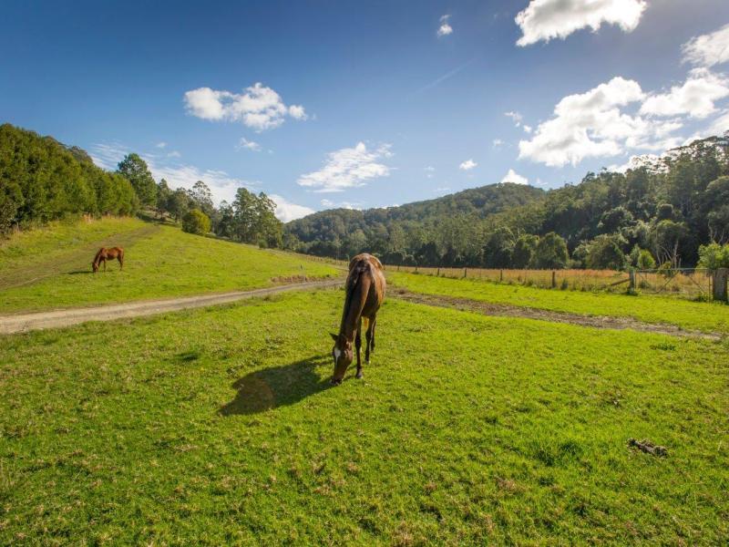 198B Mount Browne Road, Upper Orara, NSW 2450