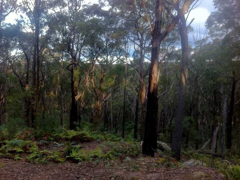 1439 Wilson Drive, Colo Vale, NSW 2575