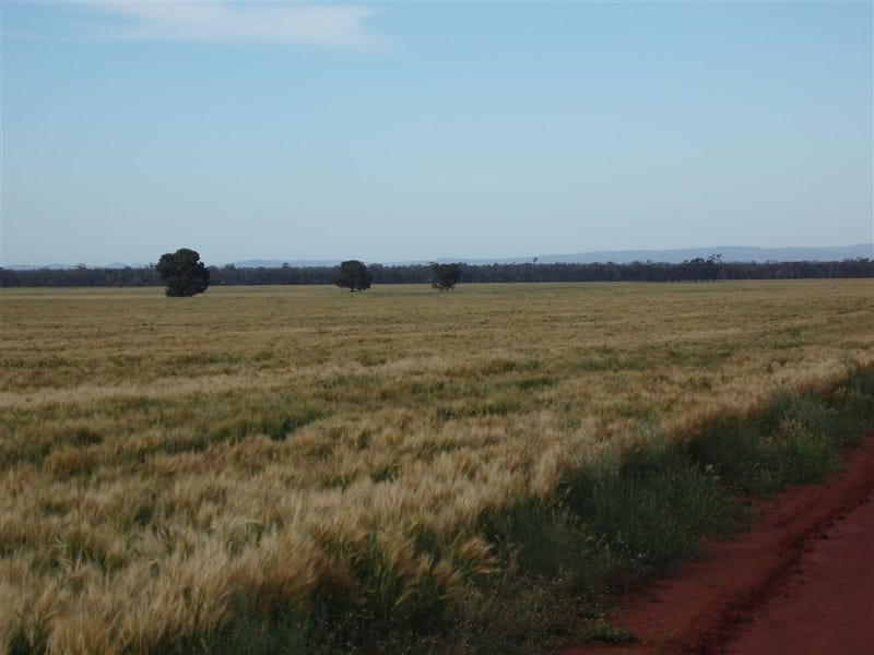 ". ""MEDINA"", TULLIBIGEAL, West Wyalong, NSW 2671"