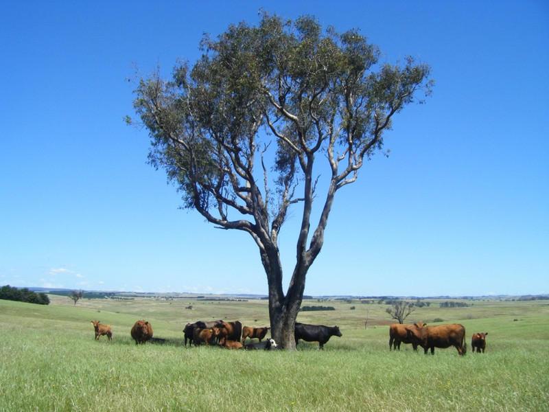 """""""Monks Creek"""" Fullerton Road, Laggan, NSW 2583"""