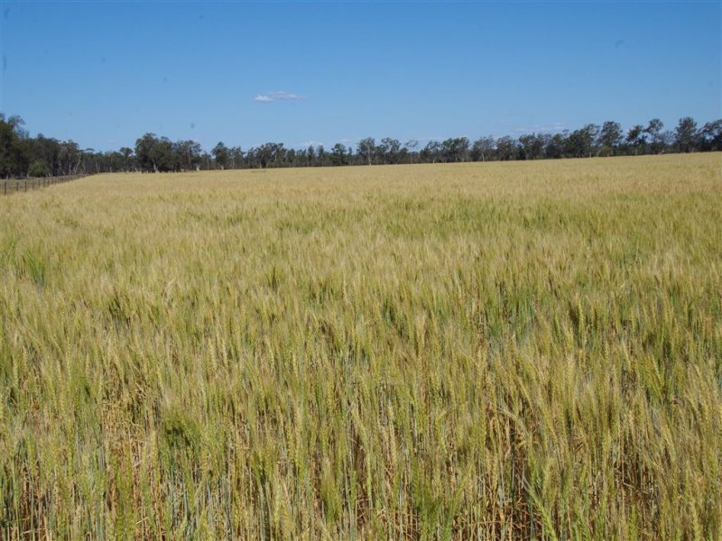 8418 Come By Chance Road, Pilliga, NSW 2388