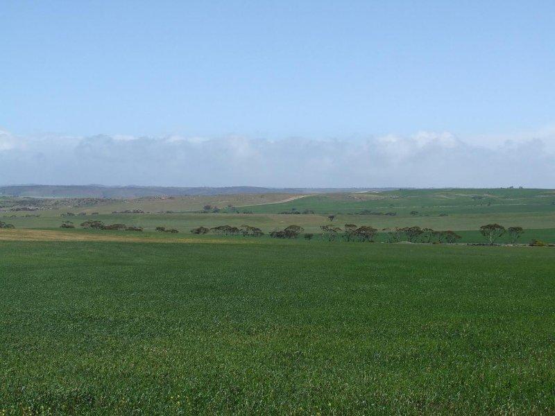 Mannum Road, Mannum, SA 5238