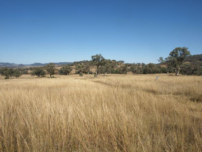 Wirraway, Mullaley, NSW 2379