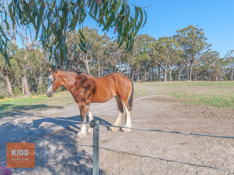 529 Ironbark Road, Mangrove Mountain, NSW 2250