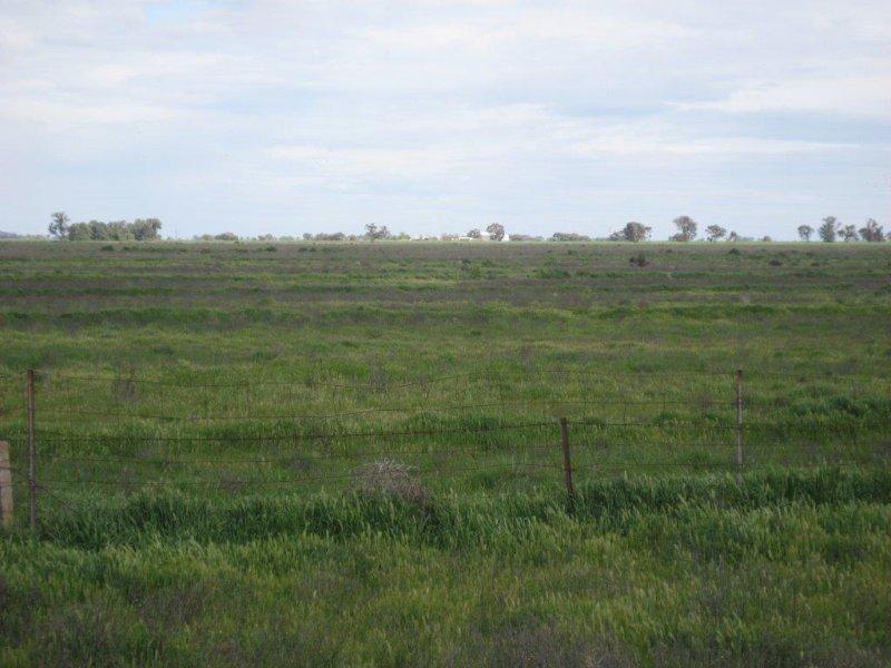 Farms 86F, 86G, 86H & 86I Hulong Road, Whitton, NSW 2705