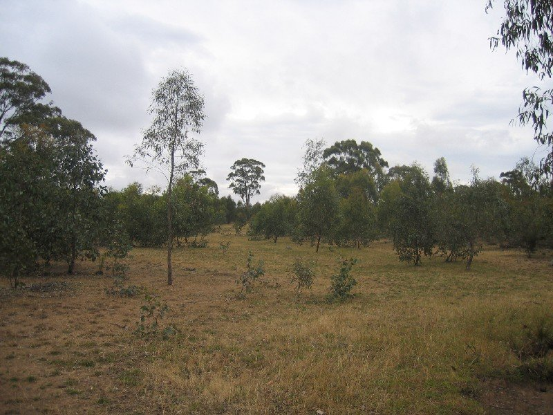 C/A 19J MT CAMEL-GREYTOWN ROAD, Redcastle, Vic 3523