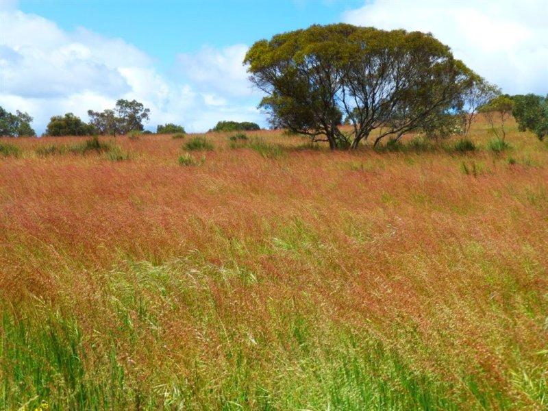 . Old Stone Tank Road, Mundulla, SA 5270