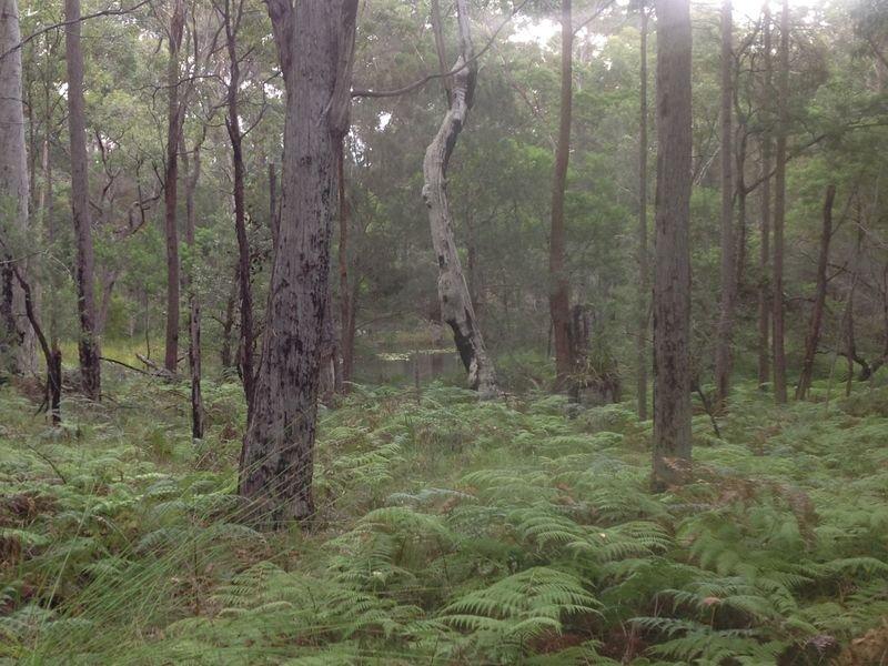 27 Spring Place, Bingie, NSW 2537