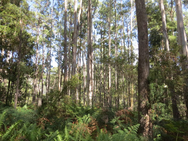 Lot 1 Lorinna Road, Lorinna, Tas 7306