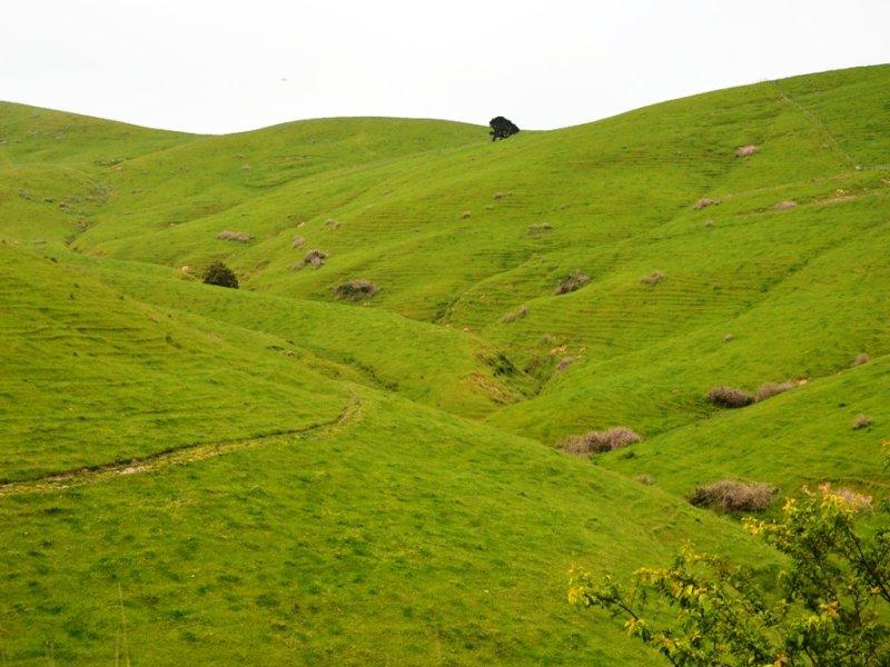 1650 Loch-Wonthaggi Road, Almurta, Vic 3979