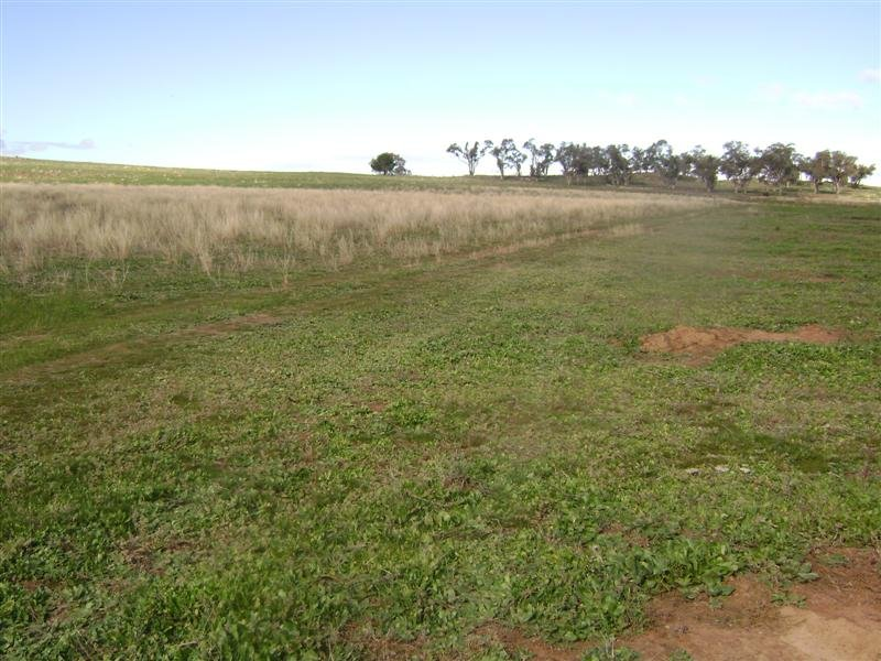Lot 8 Wirrimah Road, Wirrimah, NSW 2803