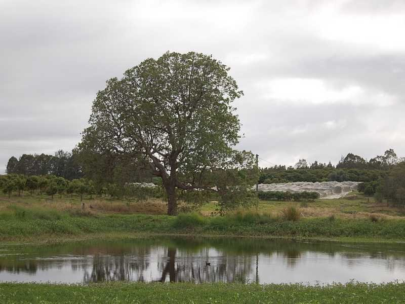 1165 Bulmers Road, Hogarth Range, NSW 2469