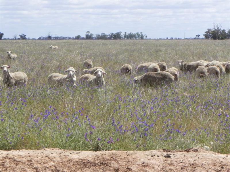 . MOONEE SWAMP RD, Deniliquin, NSW 2710