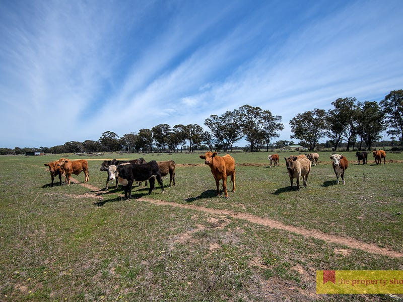 82 Nugget Lane, Gulgong, NSW 2852