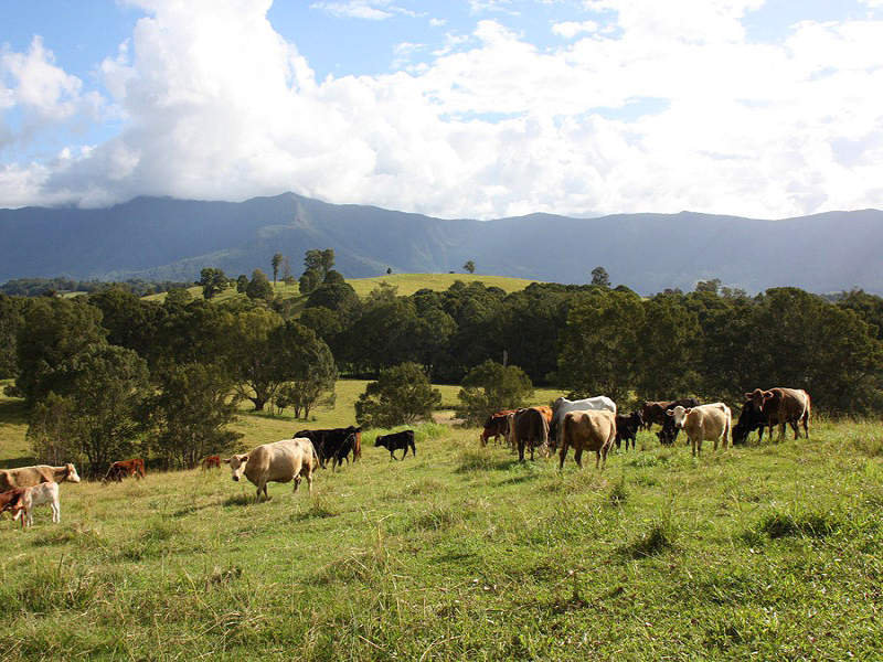 LOT 22 Larkins Road, Murwillumbah, NSW 2484